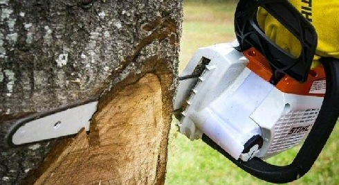 Which Is The Best Chainsaw?